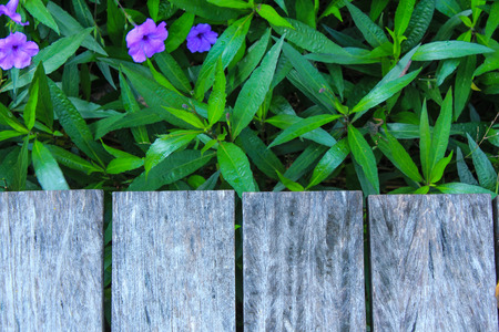 wood and green plant texture photo