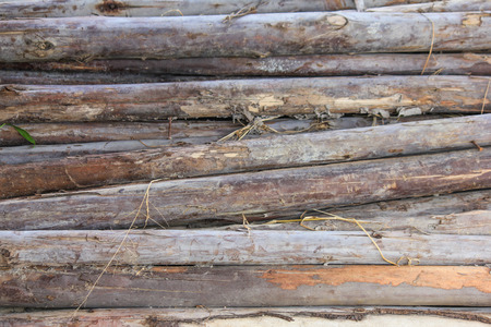thorn tip: wood texture