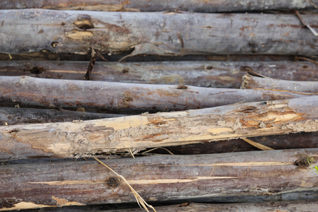 thorn tip: Wood texture Stock Photo
