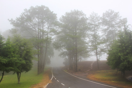 The forest landscape with mist