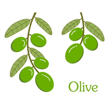 The bunch of green olive with leaves on the white background Stockfoto
