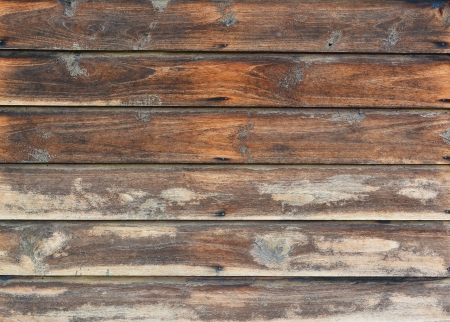 arboreal: the texture  wood   natural patterns background