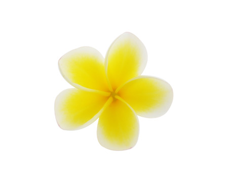 Tropical flowers frangipani (plumeria) isolated on white background photo
