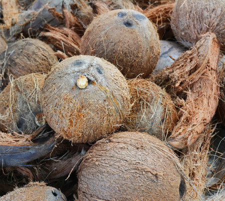 desiccated: pile of dried coconuts for background