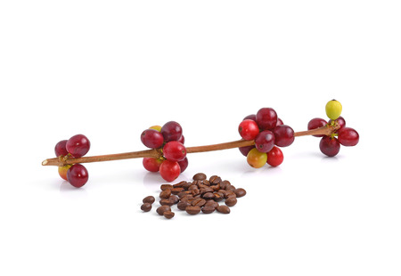 coffea: coffee beans on white background. Stock Photo