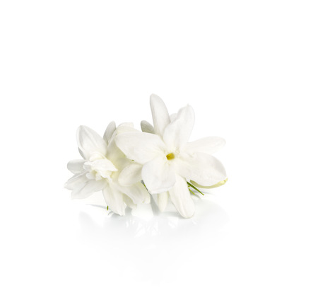 Jasmine flower over white background Stock Photo