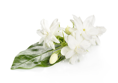 Jasmine flower over white background Stock Photo