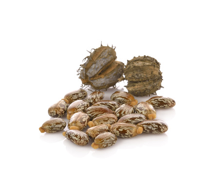 Castor oil seeds (Ricinus Communis) isolated on white 版權商用圖片