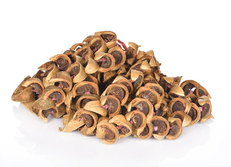areca: dry areca nut or betel nut or areca catechu for chewing snack on white background.