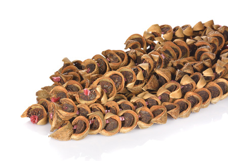 dry areca nut or betel nut or areca catechu for chewing snack on white background.
