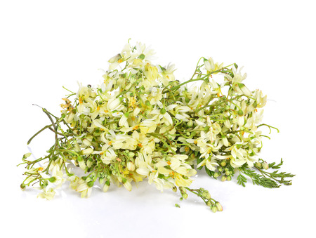 Moringa flowers on a white background