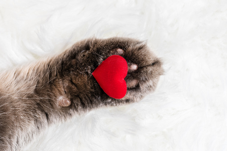 Cat's Paw with a red heart on white fur background Stock Photo