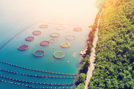 Cultivation of mussels, aquaculture. Fish farm in the sunlight, top view 免版税图像