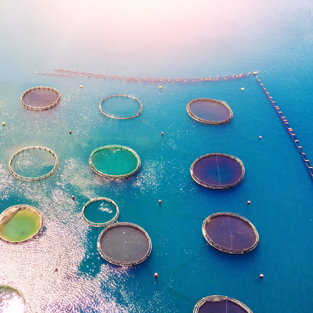 Aquaculture Mesh in the sunlight, top view