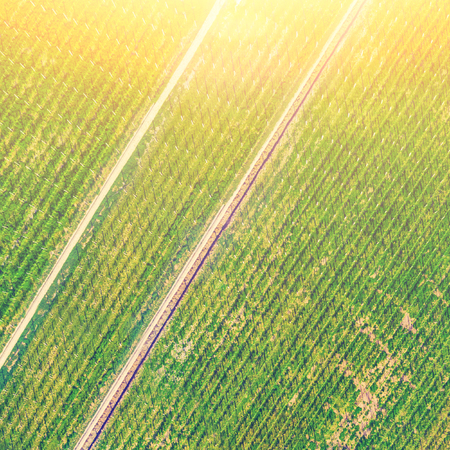 Top view of a green farmland in the sunlight Stock Photo