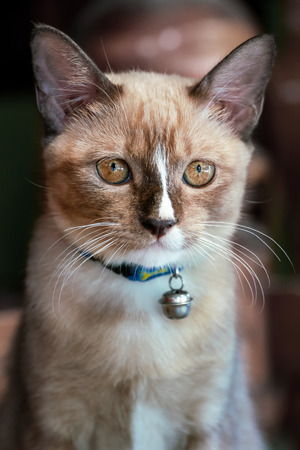 Portrait of a cute kitten with a bell on his neck
