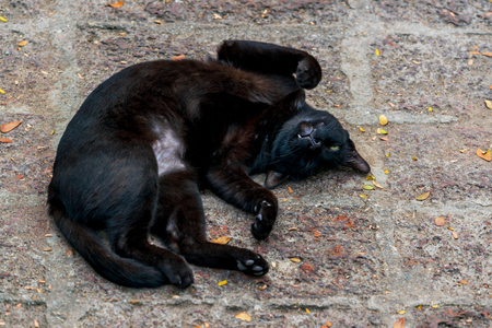 Black cat sleeping on the pavement