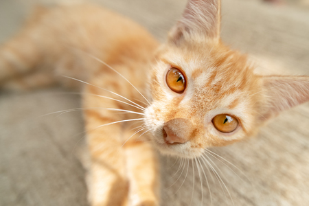 Lovely redhead kitten lying on the sidewalk, close-up