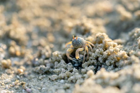 Little crab on the sand
