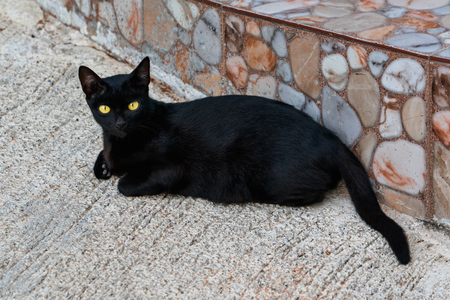 Portrait of a black cat with yellow eyes