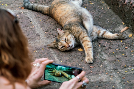 A woman is taking pictures of a cat lying on the sidewalk