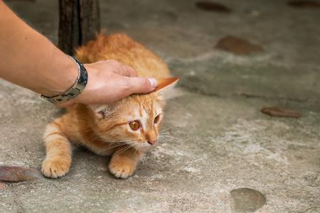 A woman caresses a orange street cat Reklamní fotografie