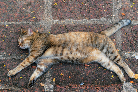 Stray cat sweetly sleeping on the pavement Stock Photo