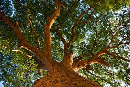 Grandi alberi, ombreggiato, vecchio legno, naturale, tranquillo