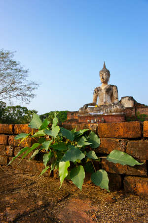 Bodhi tree, Wat Maechon in Siam Thailand, Historic Town of Sukhotai and Associated Historic Towns The historic city of Sukhothai. photo