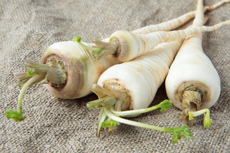 Four fresh parsley root on the gray canvas