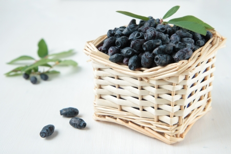 Honeysuckle berries in a basket and branch photo