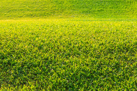 Green lawn for background  photo
