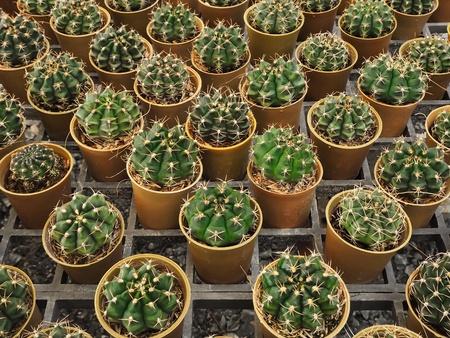 decor: Cactus in a pot Stock Photo