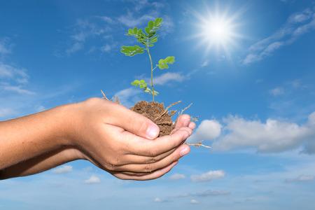 curare teneramente: Young plant in child hands.
