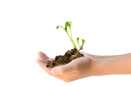 young plant: Closeup of two hands holding young plant on white background.