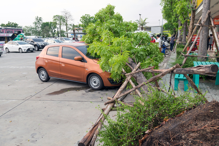 caused: Nakhorn Ratchasima-Thailand,May 8,2016:Heavy rain and gale force winds caused a tree fell on the car of the people using the service in a gas station was damaged. Editorial