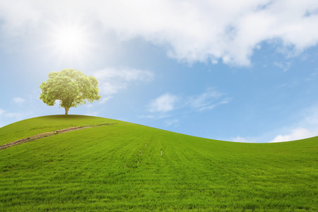 vacant land: A single tree on a hill on the arches of verdant meadows and the beautiful backdrop of the sky.