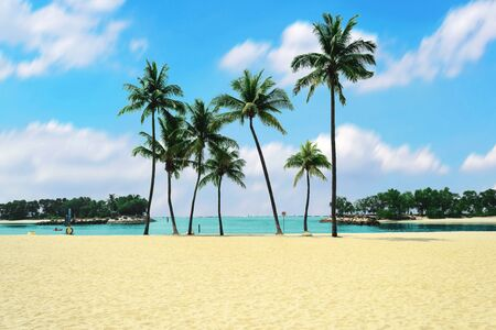 Group of coconut trees with the white sands on the beach with beautiful clouds sky background.