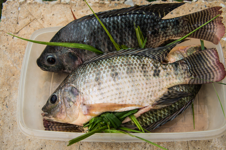 samll: Tilapia fish in samll plastic box preparation for Cooking. Stock Photo