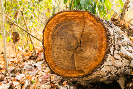 wood cut: Cut wood in the forest.