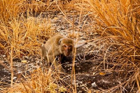 Wild Monkey on the stone with yellow prairie photo