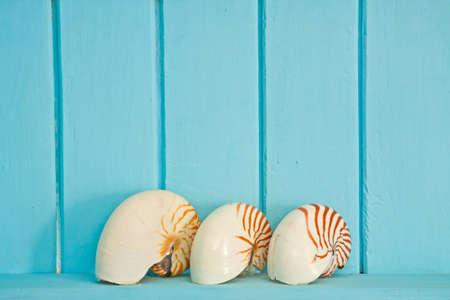 Shellfish decoration of the sea photo