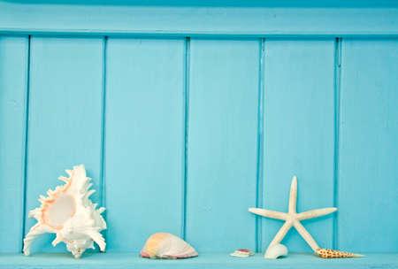 Shellfish decoration of the sea, Ocean decoration photo
