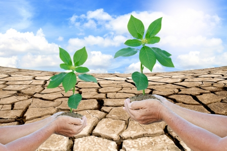 Hands holding a green young plant. Symbol of spring and ecology concept Stock Photo - 16404393