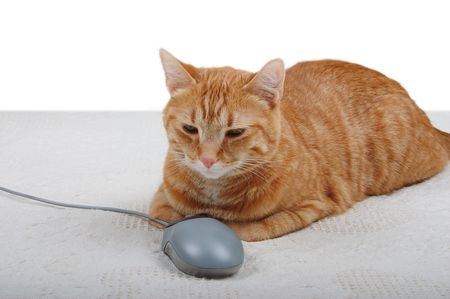 Cat in control of a PC mouse photo