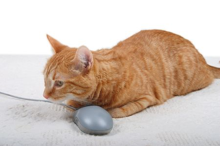 Cat with a PC mouse Stock Photo - 770351