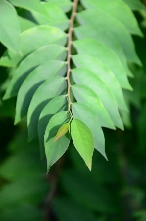 wristwatch Leaf