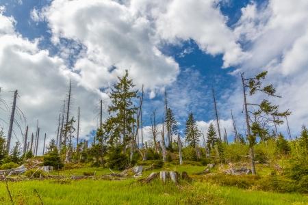kwaśne deszcze: Umierające lasy w Lesie Bawarskim na Lusen. Waldsterben im Bayerischen Wald auf dem Lusen