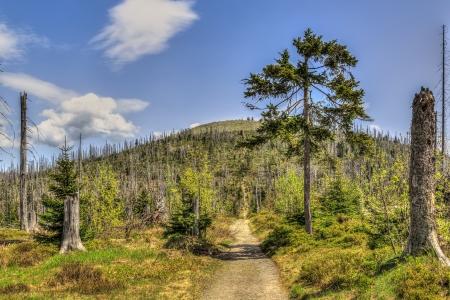 kwaśne deszcze: Umierające lasy w Lesie Bawarskim na Lusen Waldsterben im Bayerischen Wald auf dem Lusen