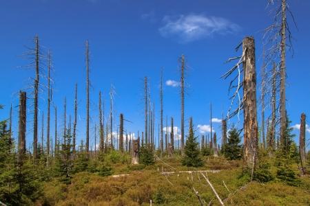 lluvia acida: Morir bosques en el Bosque de Baviera en el Lusen Waldsterben im Bayerischen Wald auf dem Lusen